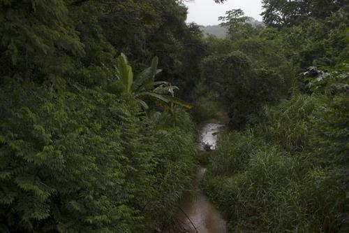 지난 20년간 프랑스 크기 숲 재건…파괴된 숲 6분의 1 그쳐