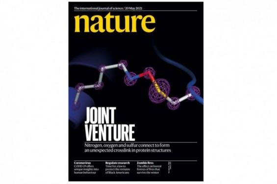 [표지로 읽는 과학] 단백질에서 발견한 새로운 교차결합