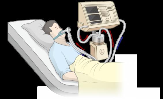 [강석기의 과학카페] 장이 제2의 폐가 될 수 있을까
