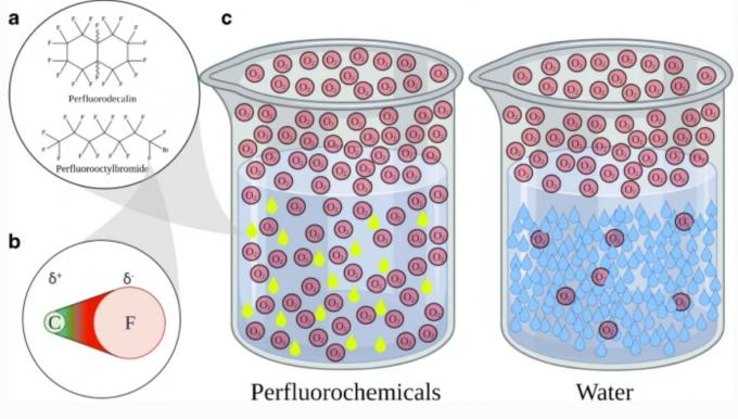 연구자들은 산소 기체 대신 인공혈액으로 쓰이는 과불화탄소에 산소를 포화시킨 액체를 주입하는 방법을 고안해 장벽을 손상하지 않고도 장호흡이 효과적으로 일어나게 하는데 성공했다. 산소분자는 과불화탄소 용액(perfluorochemicals)에서 물에서 보다 훨씬 많이 녹는다. 유럽생리학저널 제공