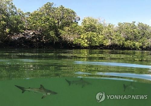 상어 70% 사라진 1천900만년 전 의문의 멸종 위기 새로 밝혀져