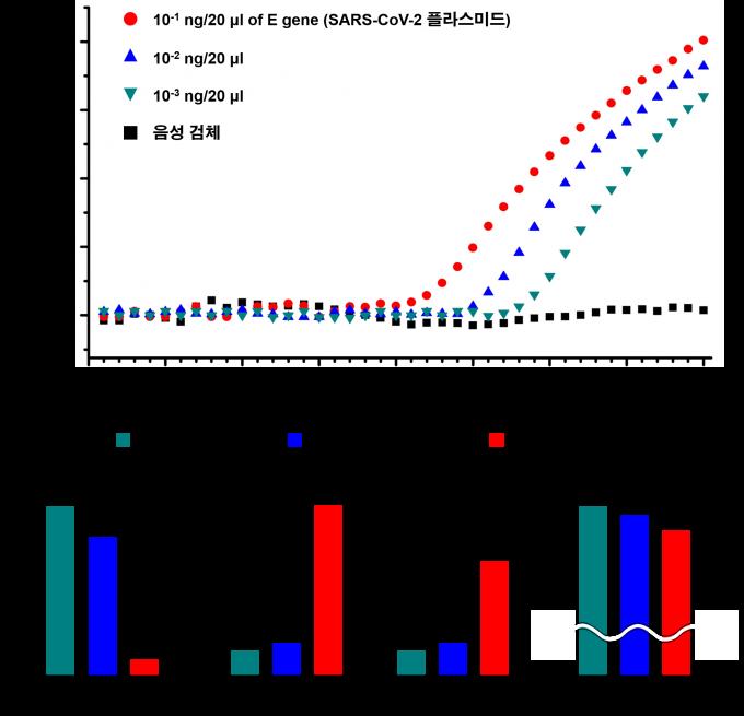 코로나19 플라스미드 DNA로 검증한 결과 다른 실시간 PCR보다 빠른 . KAIST 제공