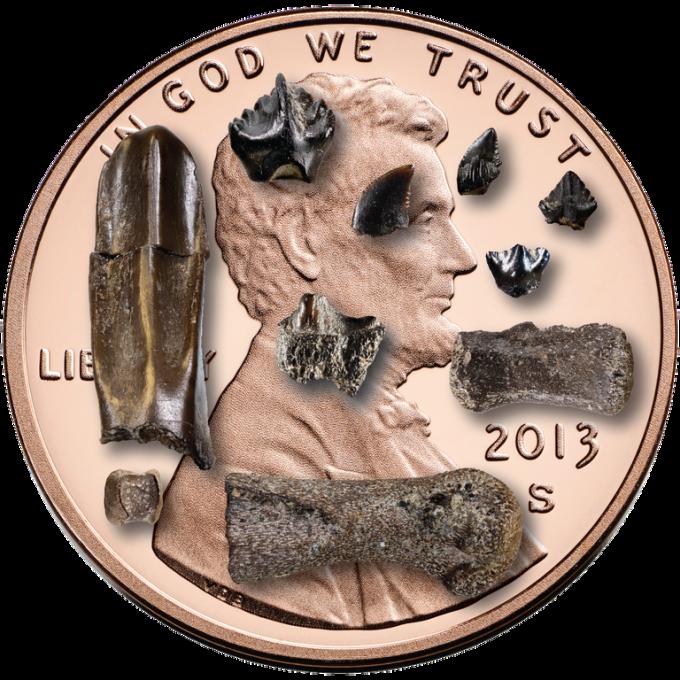 미국 알래스카 북부 콜빌강 유역에서 발견된 아기공룡 뼈. 미국 알래스카대 박물관 제공