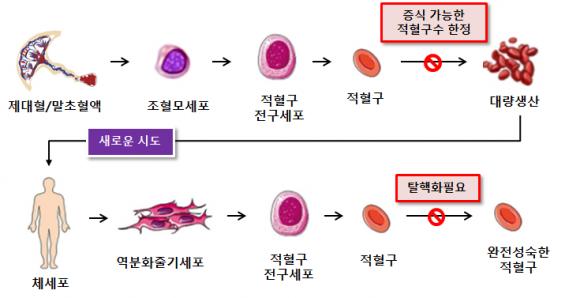 2030년대 국내서 수혈용 인공혈액 대량 생산한다