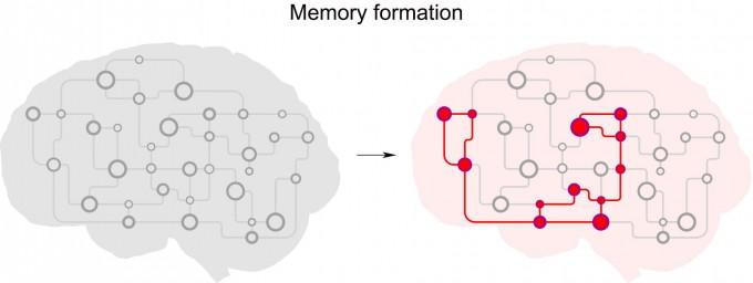 강하게 서로 연결된 뉴런 집합체에서 기억이 형성되는 과정 모식도. KAIST 제공.