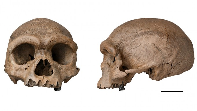 1933년 중국의 한 노동자가 하얼빈 쑹화강 철교 부설 공사 현장에서 발견한 인류의 두개골이 88년 만에 빛을 봤다. 연구자들은 논문에서 현생인류와 가까운 새로운 종인 호모 롱기라고 주장했기만 몇몇 고인류학자들은 데니소바인일 것이라고 반박했다. Xijun Ni 제공