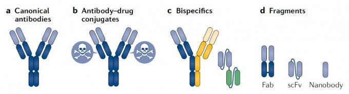 FDA 승인을 받은 항체치료제 100종의 80%는 전형적인 형태(맨 왼쪽)이지만 독한 약물과 결합된 형태(antibody-drug conujugates)(표적 부위로 약물을 데려가는 역할을 한다)와 두 가지 항원을 인식하는 형태(bispecifics), 항원 인식 부위만 있어 덩치가 작아 침투력이 높은 형태(fragments)도 있다. 네이처 리뷰스 약물 개발 제공