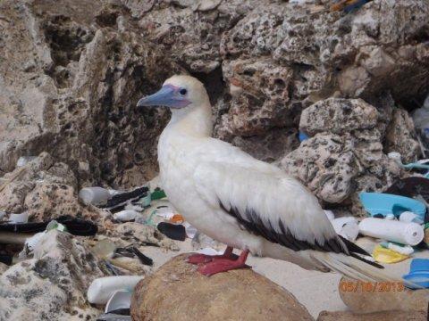 해양쓰레기 심각성 알리는 작가전 '바다의 미래를 그리다' 전시회