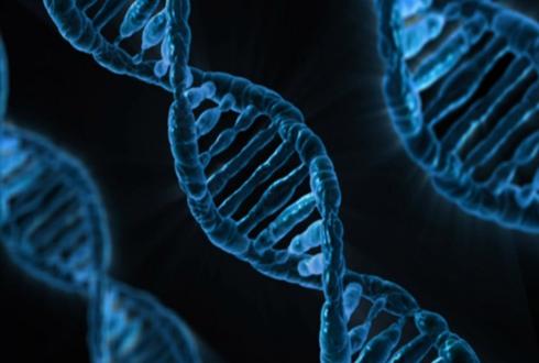 [사이언스 브리핑] 크리스퍼 유전자 가위 분석법 개발 外