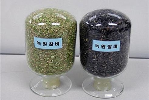 """방사선 육종기술로 만든 신품종 종자, """"잘 키워주세요"""""""