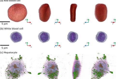 살아있는 세포, 입체영상으로 보는 현미경 나왔다