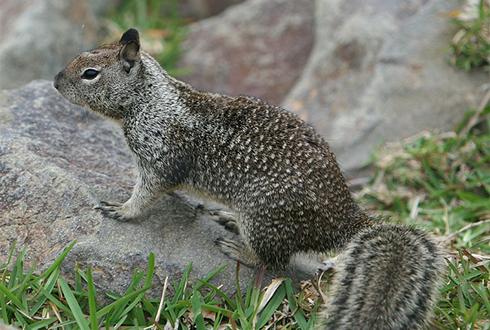 방울뱀 허물로 스스로를 보호하는 다람쥐