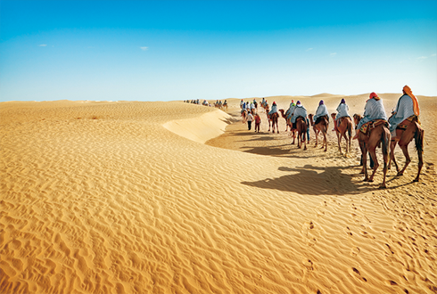 낙타 유전자 다양성의 비결은 '여행'