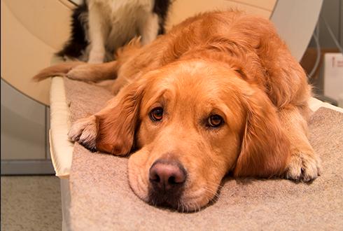 개는 사람 말의 의미 뿐만 아니라 ○○에도 반응한다!