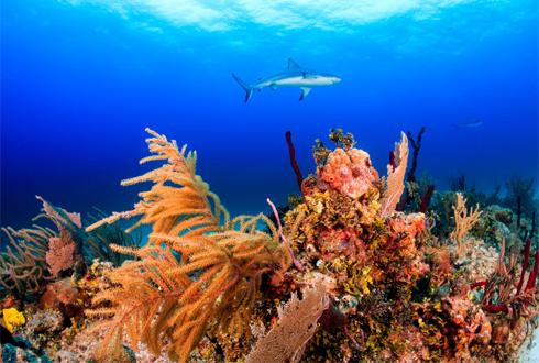 대형 물고기 오줌이 산호초 지킨다
