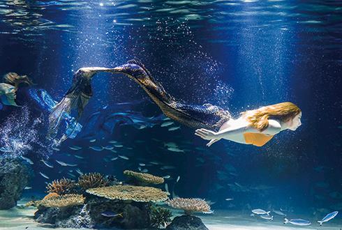 웜홀로 떠나는 수중 생태계 탐험! 아쿠아플라넷63