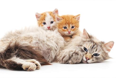 아기 고양이에게 가장 빨리 반응하는 건 엄마 or 아빠?