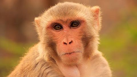 원숭이가 말 못하는 진짜 이유