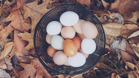 하얀 달걀 줄까, 갈색 달걀 줄까? 사라진 하얀 달걀을 찾아서..