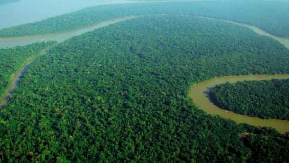 빙하기에 아마존 열대우림은 어떻게 버텼을까?