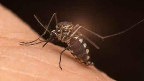 동남아 여행자 18번째 지카감염증 확진