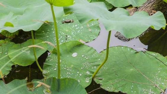 연꽃잎 닮은 오염물질 검출 센서 개발