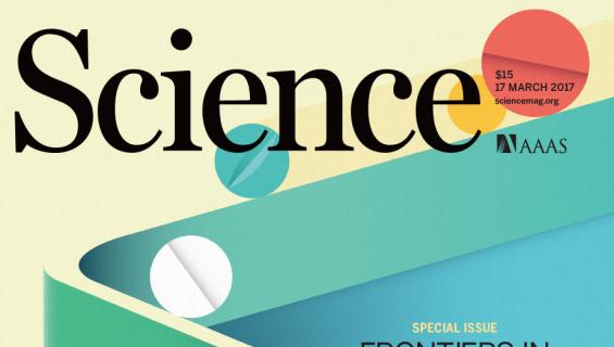 암 정복 화학치료법의 4가지 유망 후보 물질