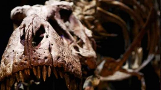 [표지로 읽는 과학] 초식 공룡도 깃털 있었다?