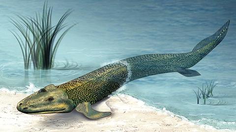 눈 덕분에 육지로 올라온 고대 수중생물