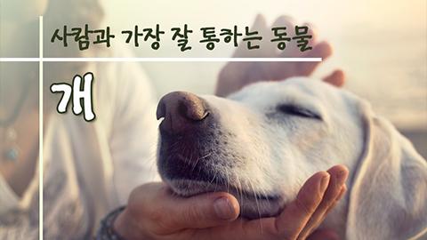 [카드뉴스] 사람과 가장 잘 통하는 동물, 개
