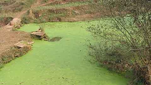 '녹조라떼'에도 깨끗한 수돗물 만든다