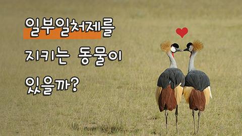 [카드뉴스] 일부일처제를 지키는 동물이 있을까?