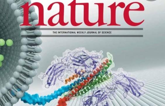 시냅스서 신경전달물질을 담은 소포체는 어떻게 방출될까