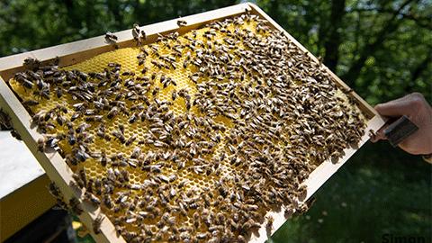 전세계 꿀 75%에서 살충제 성분 검출