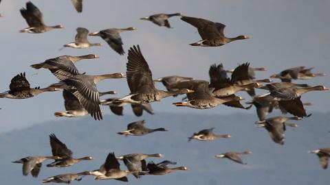 23년 모은 빅데이터로 철새 다양성 감소 확인