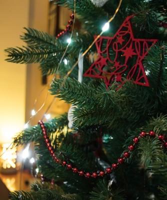크리스마스 트리의 고향은 제주?!