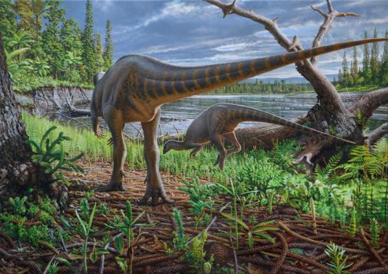 백악기 초 호주-남극 사이 계곡에 칠면조 크기 공룡 살았다
