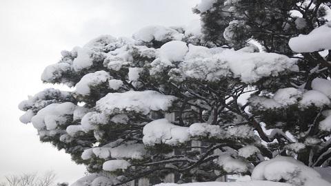삼한사온 사라진 한국, 겨울 온도 40년마다 급상승