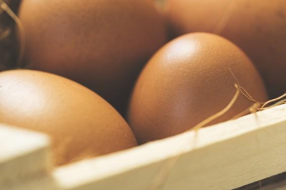 달걀껍질, 병아리 나오기 직전 약해져