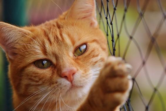 봄은 고양이로다…고양이 연구들 ①