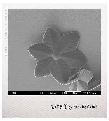 [과학사진관] 수줍은 듯 숨어있는 작은 꽃 하나