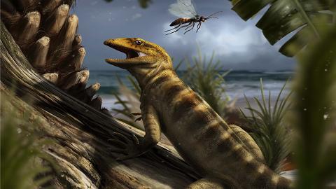 알프스산에서 2억 4000만년전 도마뱀 조상 찾았다