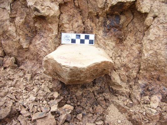 중국에서 210만 년 석기 발견...'아시아 최초의 인류'  정설 바뀌나