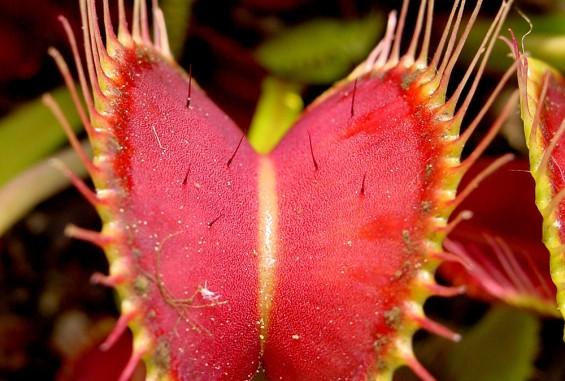 달콤살벌한 식충식물의 사냥법