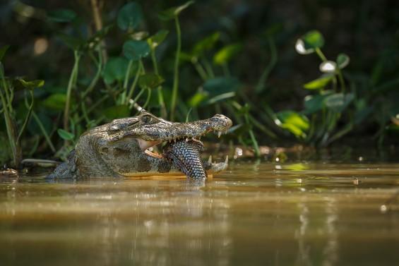 목숨을 건 연구 체험기! 아마존에서 살아남기