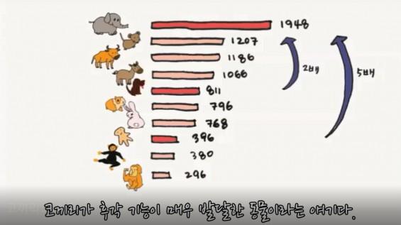 [과학 읽어주는 언니] 코끼리 후각의 비밀 개코는 정말 개코일까?