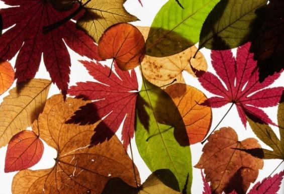 한반도 수놓는 화려한 단풍, 그 가을 정취가 사라진다