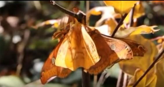 [이강운의 곤충記]은밀한 언어 '케미'