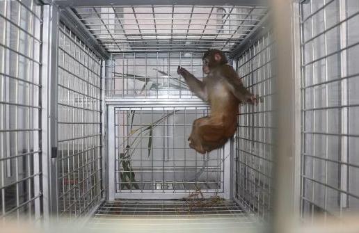 실험용원숭이는 왜 고압전류 위험 무릅쓰고 사육장을 탈출했나