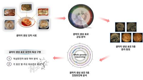 곰팡이로 오해받는 김치 표면막 정체는 '독성 없는 효모'